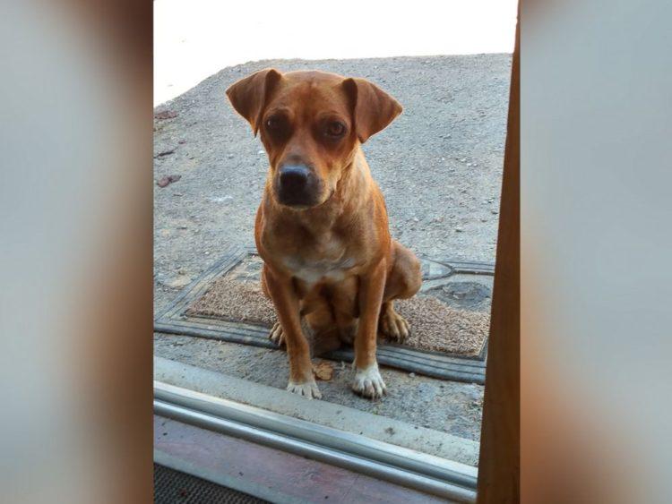 despedida-de-soltero-adoptan-7-perros2