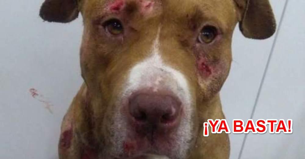 detenidos-en-jaca-por-organizar-peleas-de-perros1-copy