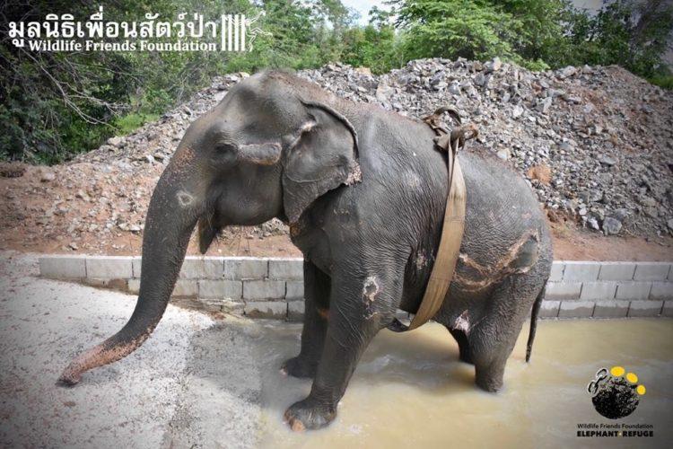 elefante-rescatado12