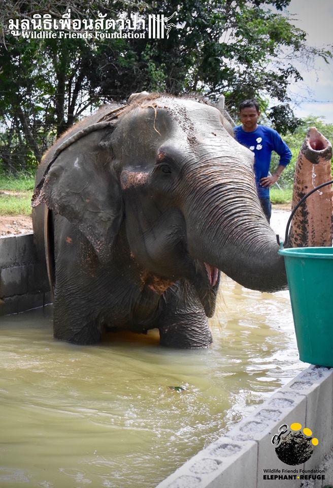 elefante-rescatado7