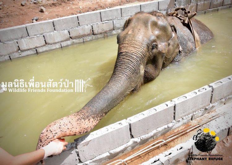 elefante-rescatado9