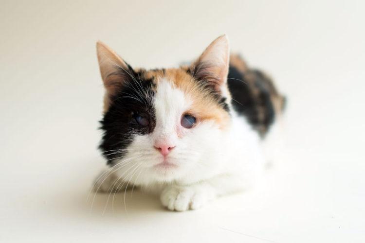 fotos-gatos-ciegos-10