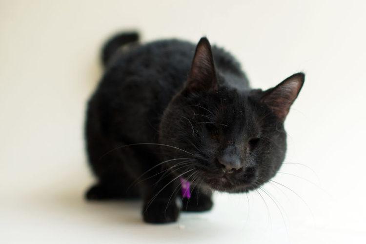 fotos-gatos-ciegos-11