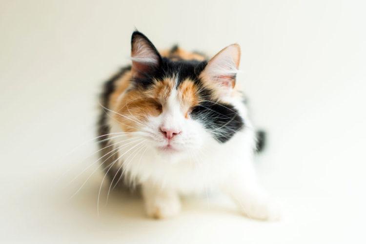 fotos-gatos-ciegos-2