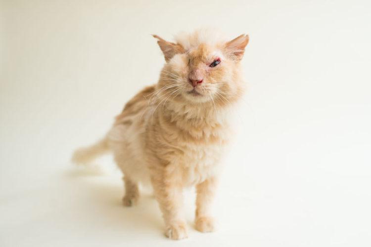 fotos-gatos-ciegos-3