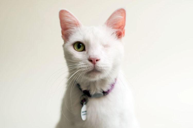 fotos-gatos-ciegos-4