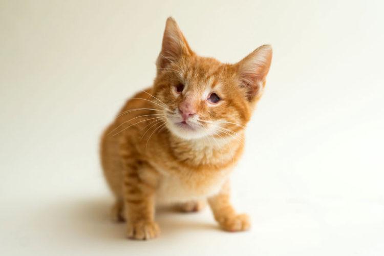 fotos-gatos-ciegos-5