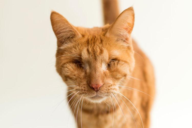 fotos-gatos-ciegos-6