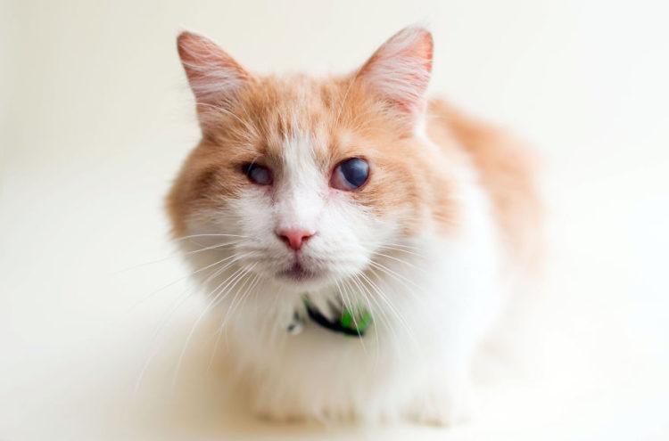 fotos-gatos-ciegos-7