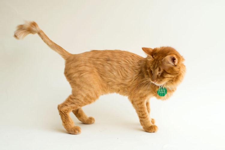 fotos-gatos-ciegos-9