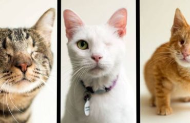 fotos-gatos-ciegos-id