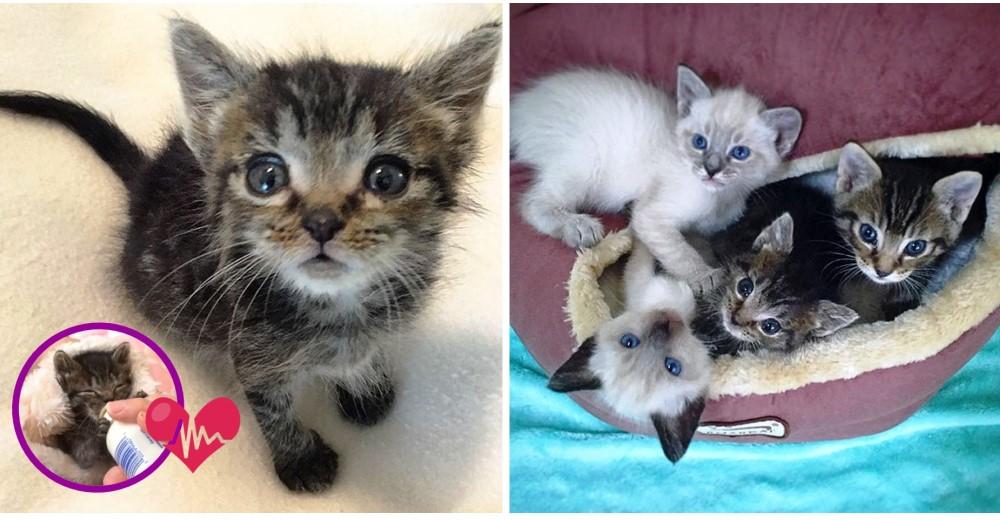 gatita-huerfana-rescatada-tiene-dos-madres
