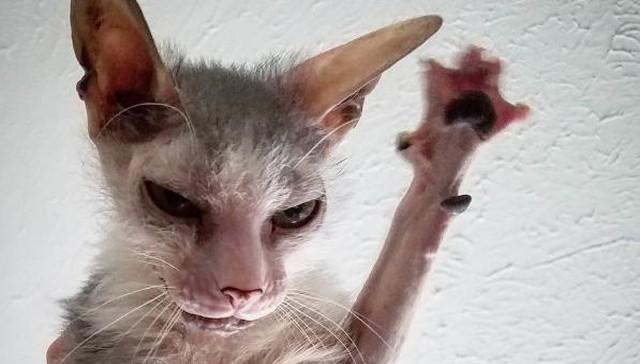 gatito-feo-1