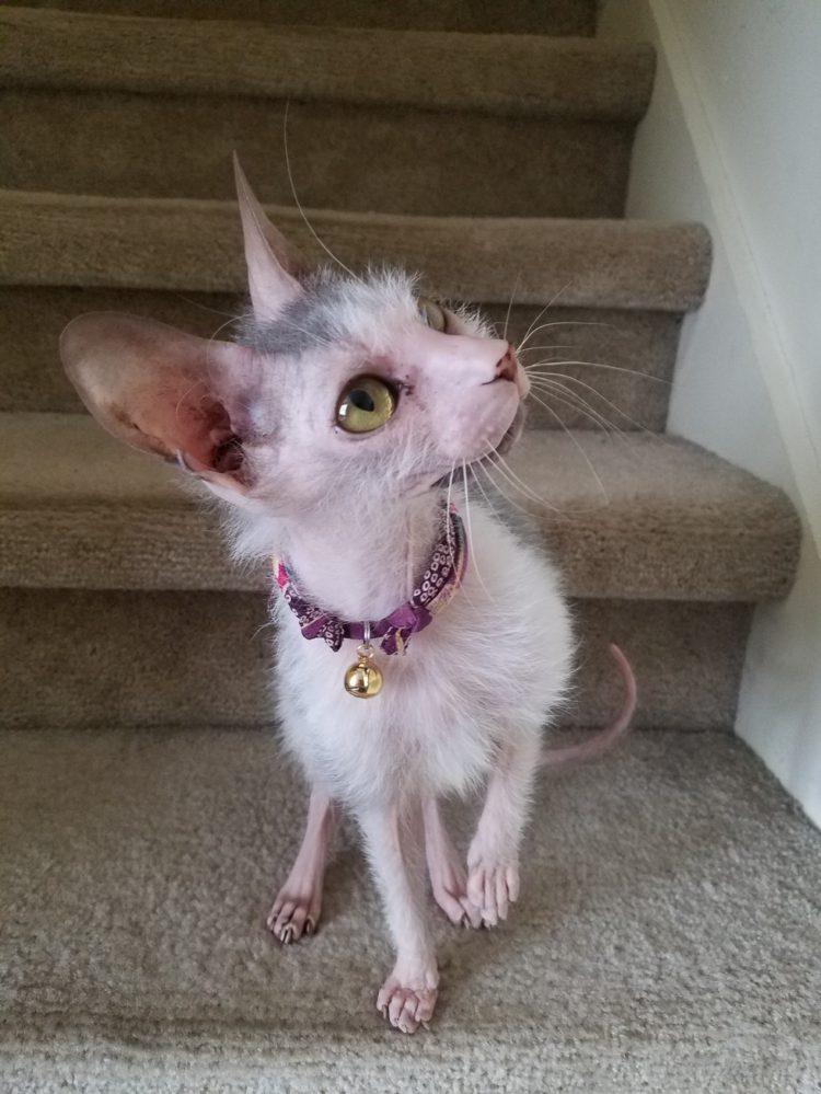 gatito-feo-2