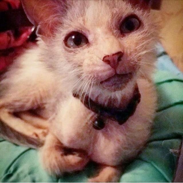 gatito-feo-4