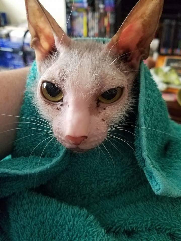 gatito-feo-7