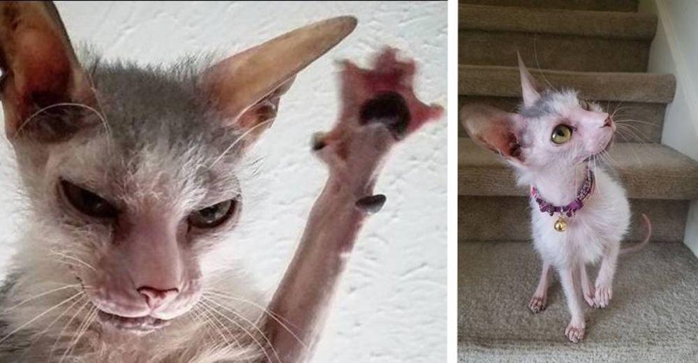 gatito-feo-id