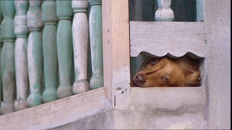 investigacion-madrid-suicidio-perros2