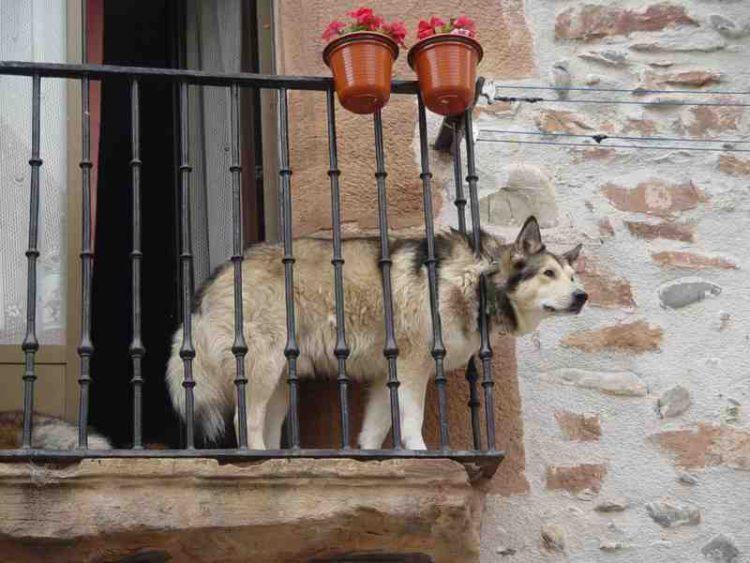 investigacion-madrid-suicidio-perros3