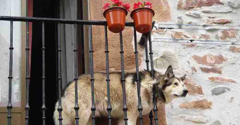 investigacion-madrid-suicidio-perros3-copy