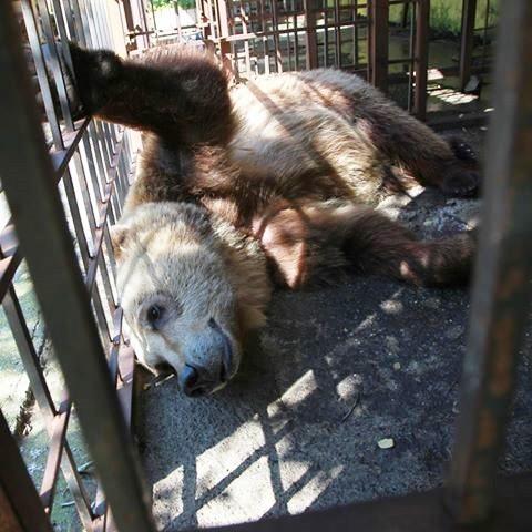 mas-tristes-de-los-osos-en-europa-2
