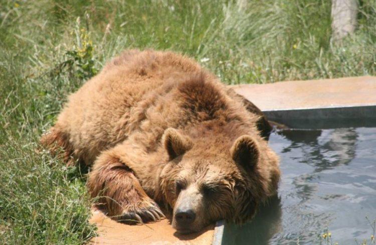 mas-tristes-de-los-osos-en-europa-5