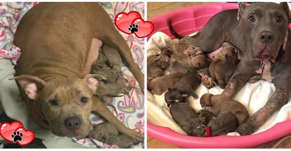 madre-e-hija-rescatadas-justo-a-tiempo-para-dar-a-luz2