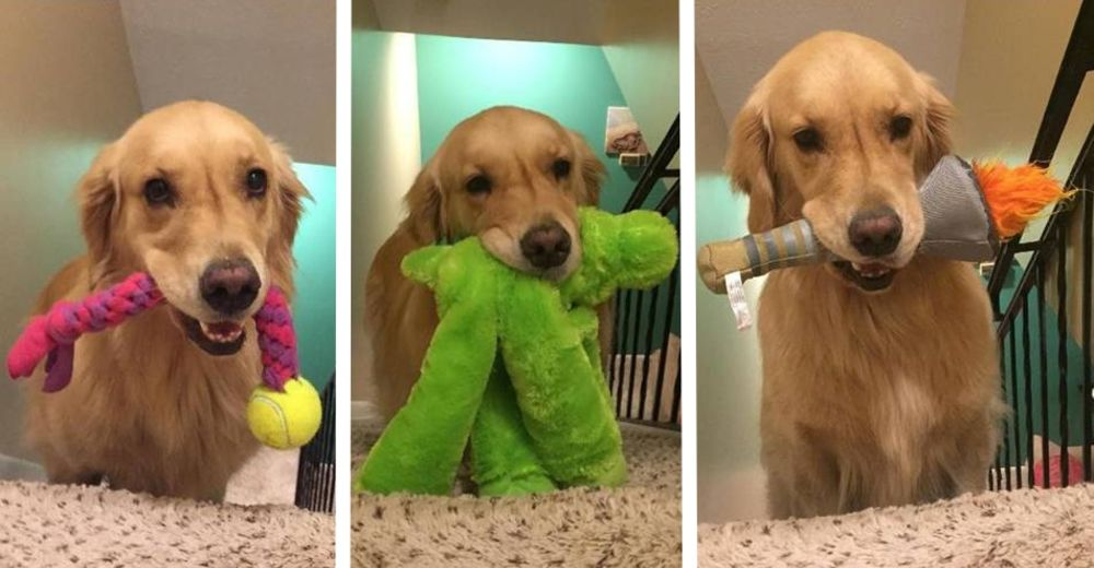 mojito-ama-juguetes-id