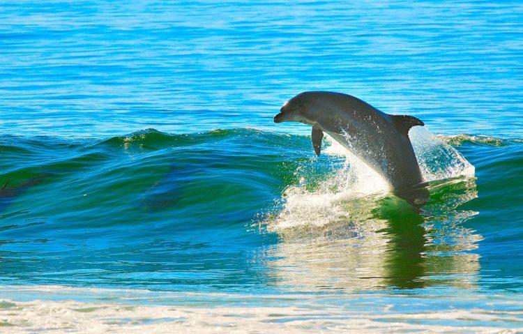 nadar-delfines2