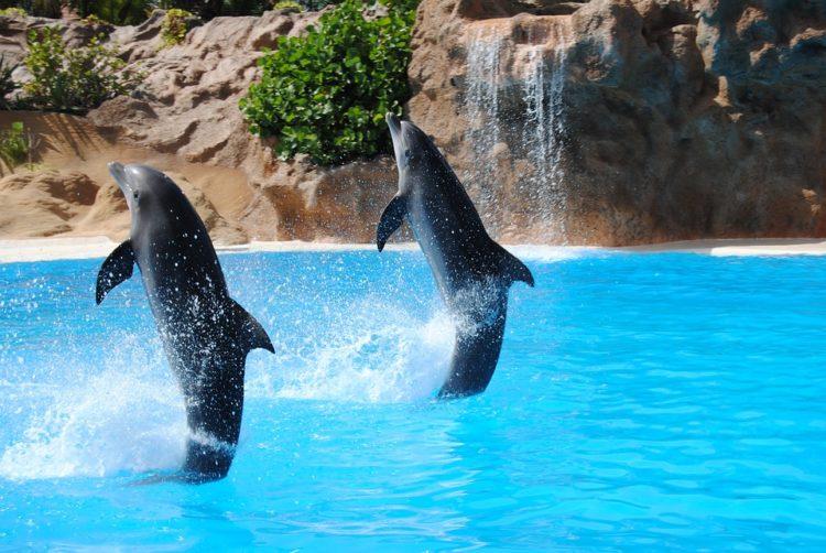 nadar-delfines3