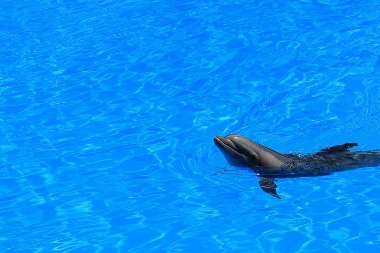 nadar-delfines4