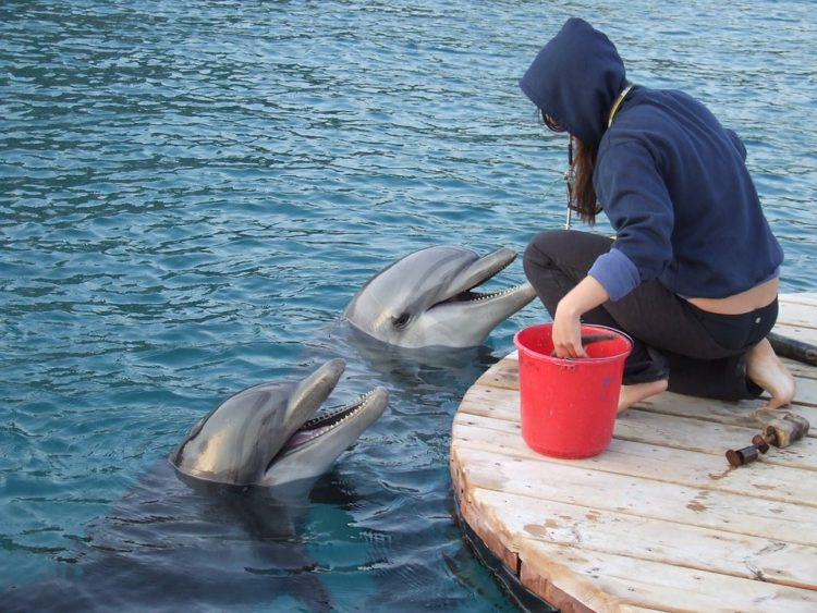nadar-delfines6