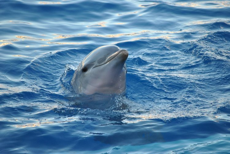 nadar-delfines7