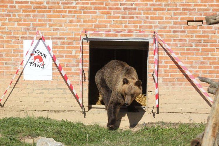 osos-liberados-10