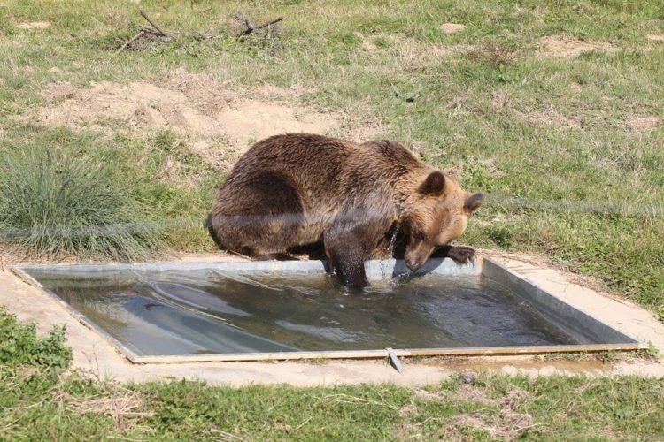 osos-liberados-2