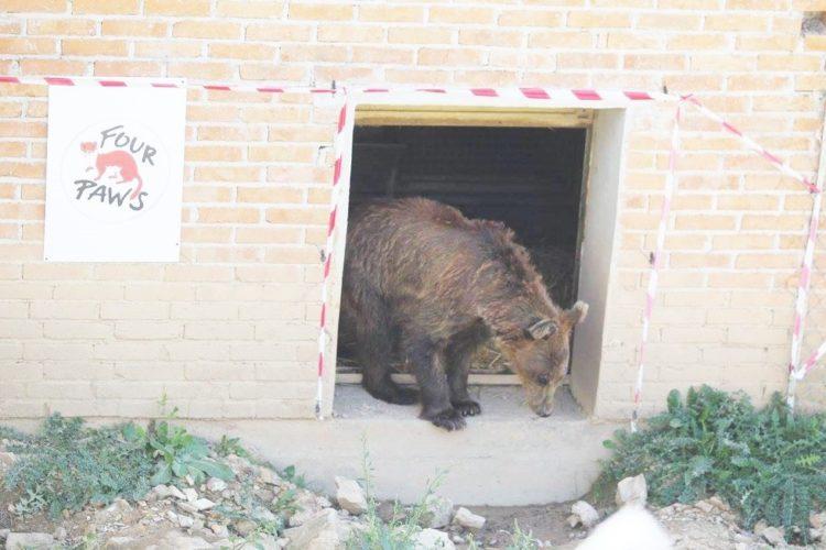 osos-liberados-3