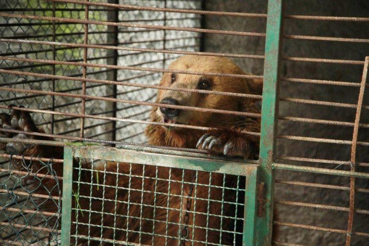 osos-liberados-4