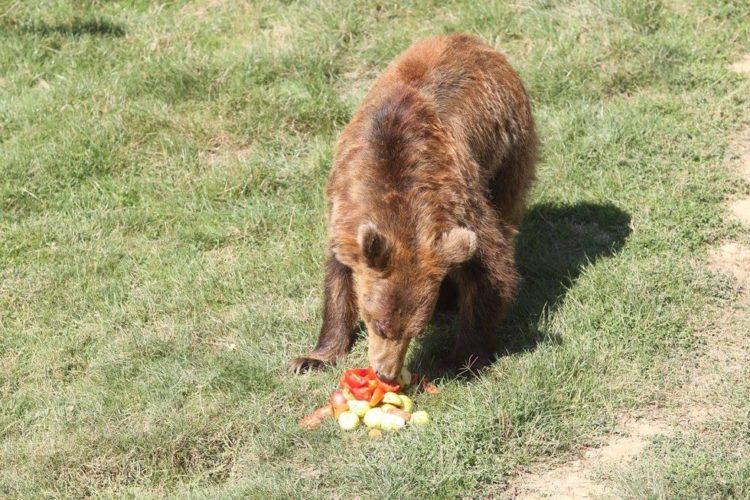 osos-liberados-6