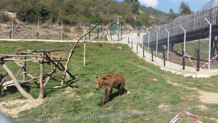 osos-liberados-7