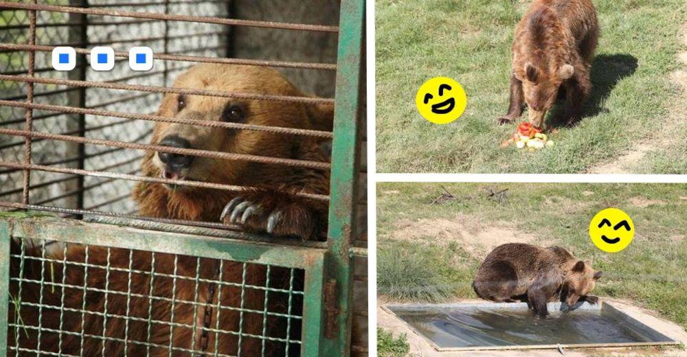 osos-liberados-id