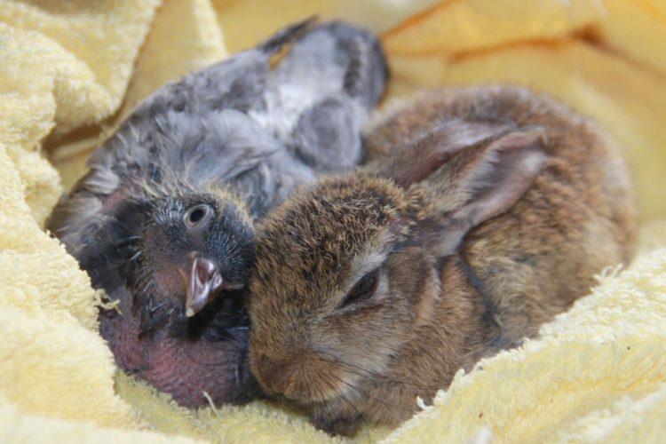 paloma-y-conejo-1