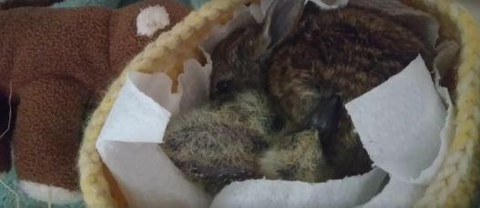 paloma-y-conejo-4