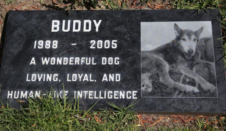 permiten-en-ny-que-entierren-a-perros-con-sus-duenos1