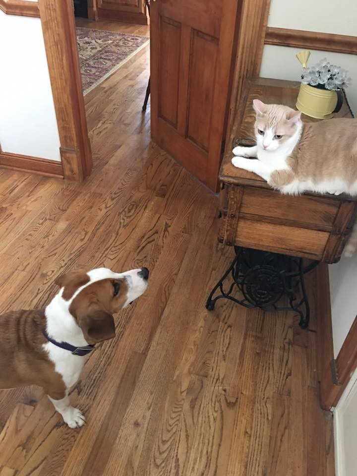 perro-amor-gato12
