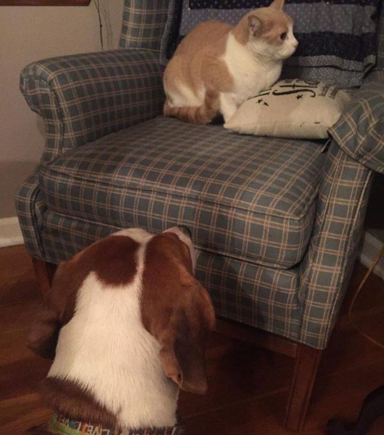 perro-amor-gato13