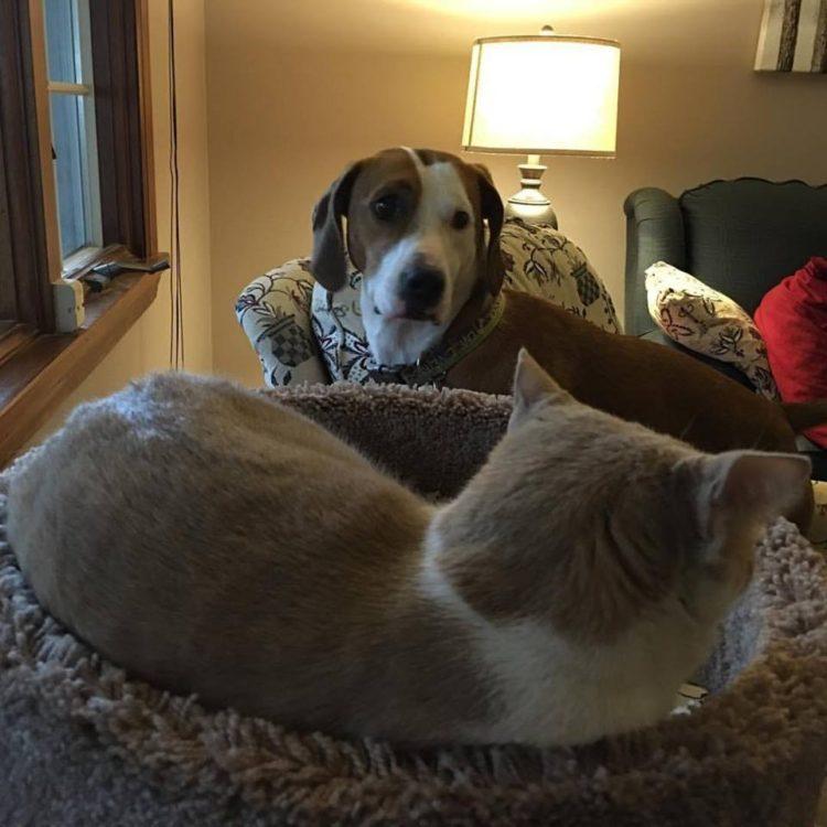 perro-amor-gato2