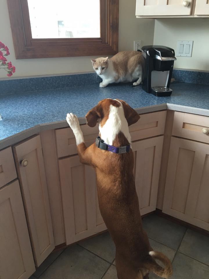 perro-amor-gato5