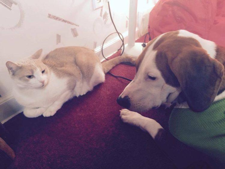 perro-amor-gato6