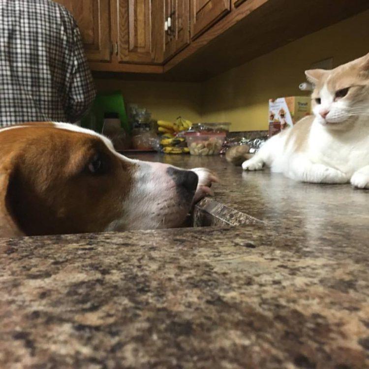 perro-amor-gato7