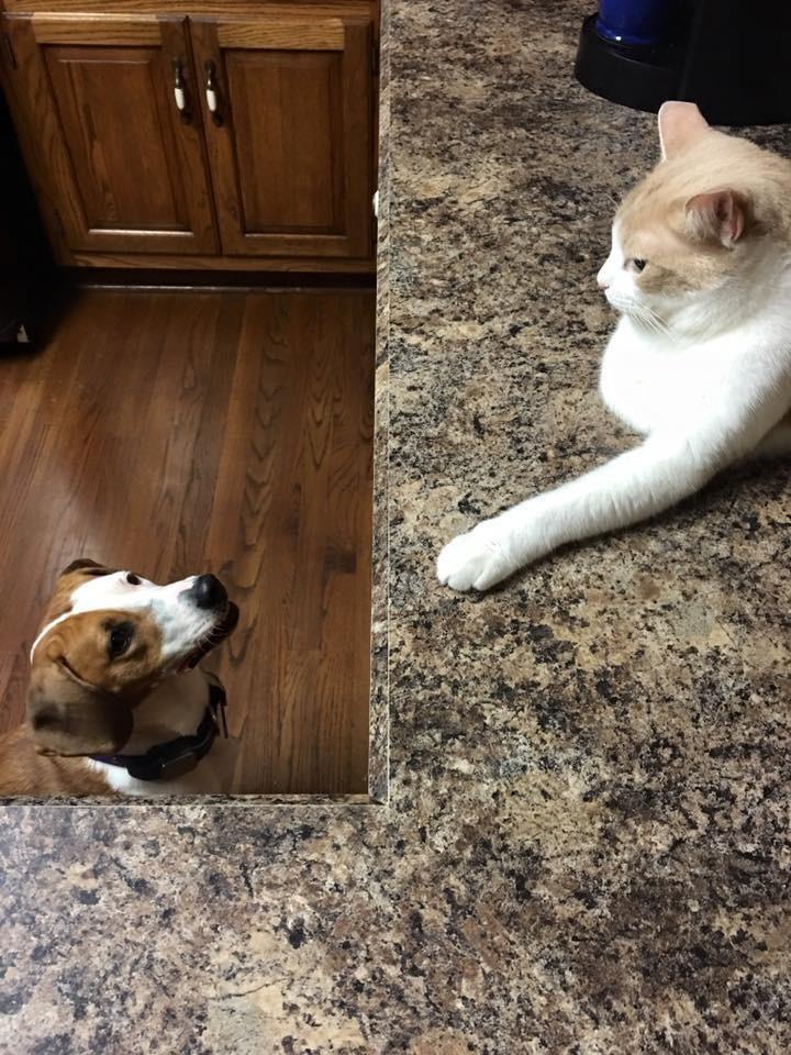 perro-amor-gato8